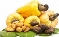 Analisa Keuntungan Bisnis Kacang Mete Gelondongan Beromset Jutaan Rupiah
